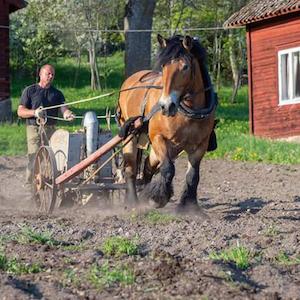 Häst- & Grönsaksbonden